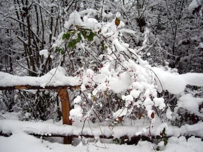 Rote Punkte im Schnee 2