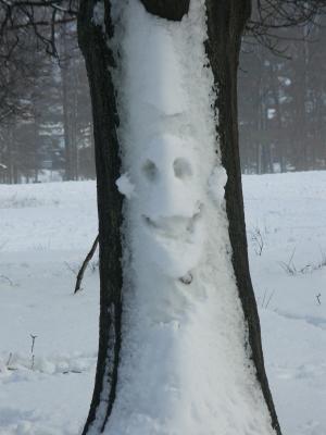 Schneesmilie am Baum...