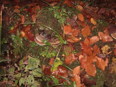 Herbstwaldboden