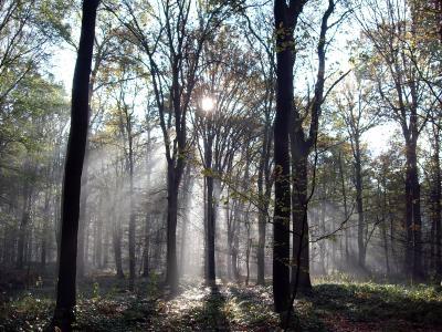 Strahlen im Wald 2