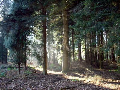Strahlen im Wald 3