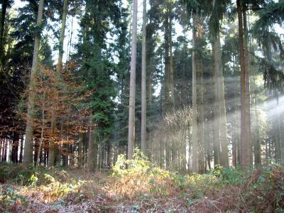 Strahlen im Wald 6