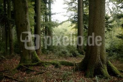 Wald märchenhaft