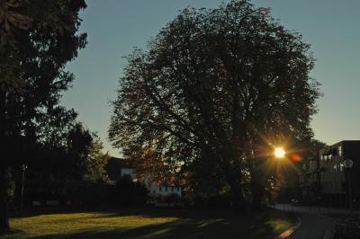 Herbst in Bergisch Gladbach