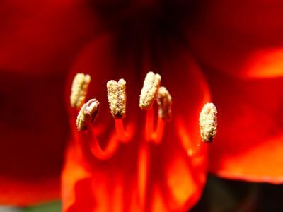 Blütenkelch I