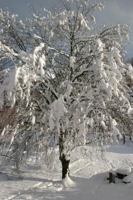 """""""Mein"""" Baum ...."""