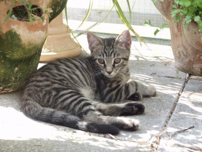 Katze auf´m Balkon