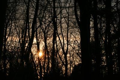 Abendromantik im Wald