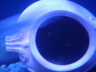 Farbenprächtige Unterwasseransicht