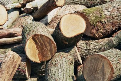 Brennholz in Rohfassung - 1 -
