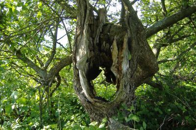 Ein Loch ist im Baum _Karl Otto...