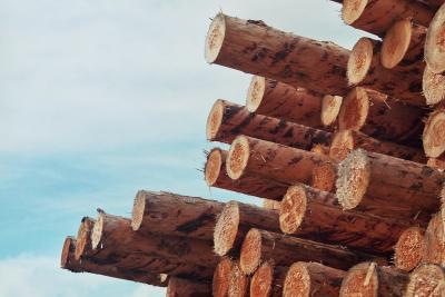 Abgeholzte Bäume