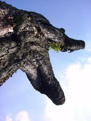 Dino-Baum