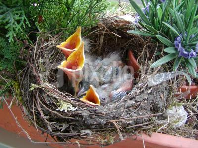 Vogelnest auf dem Balkon 4