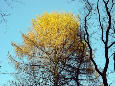 Baum-Blondine