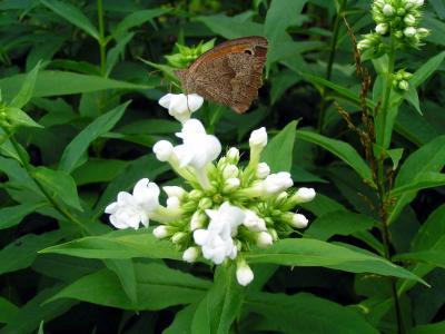 Die Blume und ein Schmetterling