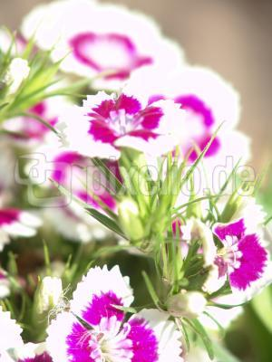blumiges_02