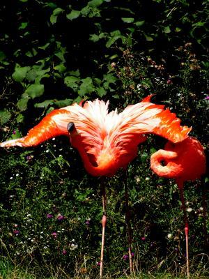 Flamingooooo