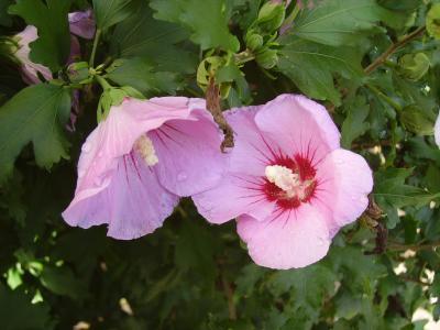 Blüten am Strauch
