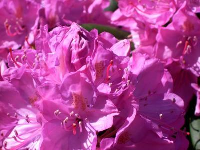Florales_1