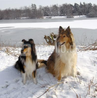 Pandra u. Bennie im Schnee