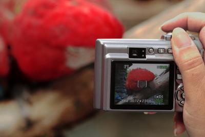 Fotografen 004
