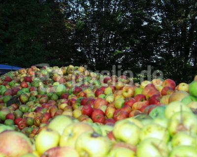 Apfelabgabe in der Kelterei