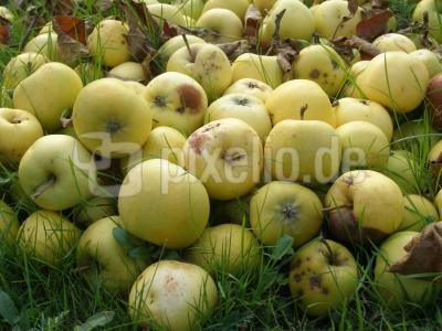 Verrottende Äpfel