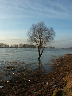 Hochwasserbaum
