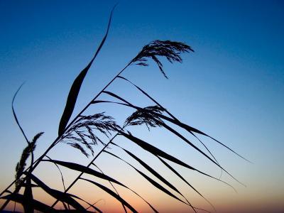 Sonnenuntergang am Stausee (4)