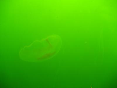 Qualle Ostsee 2