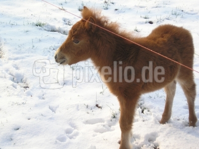 """"""" Mein erster Schnee """""""