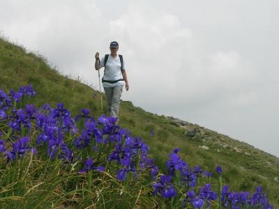 Iriswiese_2