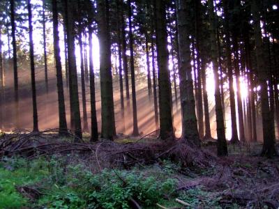 Wald und Licht 1