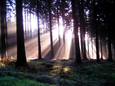 Wald und Licht 2