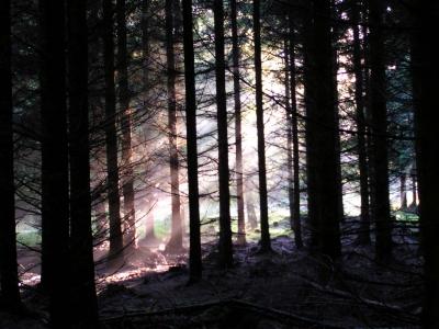Wald und Licht 3