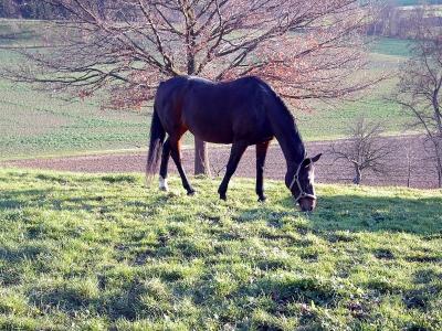 Pferd auf der Weide 3