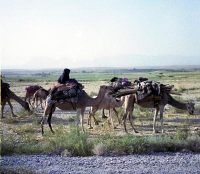 Nomadenkarawane in Afghanistan
