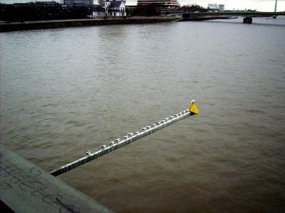 Köln Tauben auf der Stange