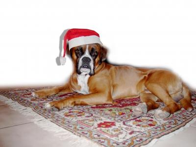 """Max wünscht """"Frohe Weihnachten""""!"""