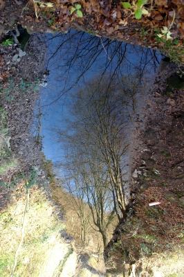 Baumspiegelung im Bachlauf