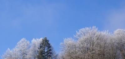 Baumwipfel im Winter