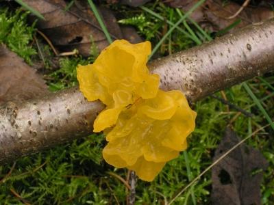 Was Gelbes im Wald
