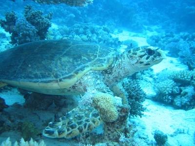 Turtle 2006