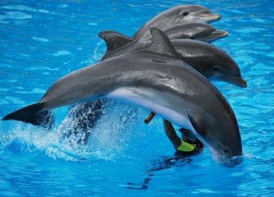 Springende Delphingruppe