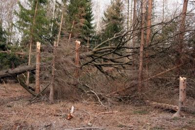 Waldspaziergang Bild 4