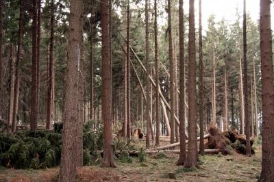 Waldspaziergang Bild 8