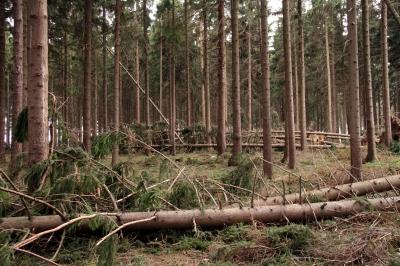 Waldspaziergang Bild 9