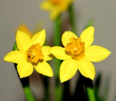 gekaufter Frühling