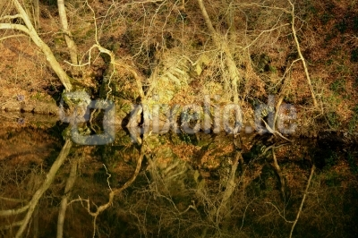 Baumspiegelung im Winter #2